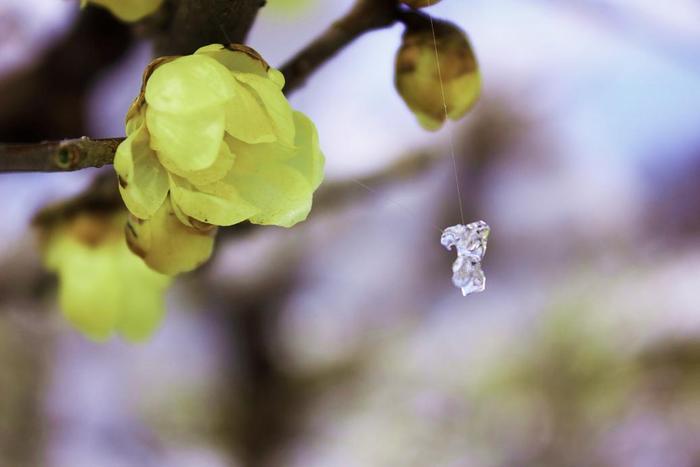 氷の飾り2.JPG